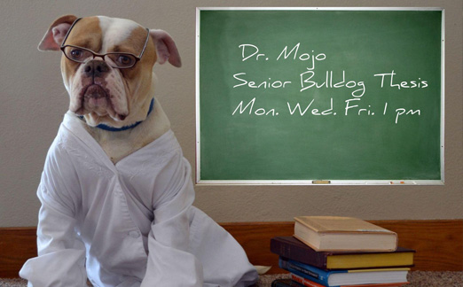 Ph.D. in Bulldog