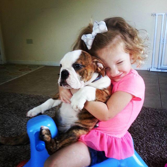 English Bulldog Breeders superior socialization