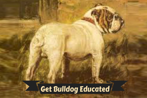 Bulldog University