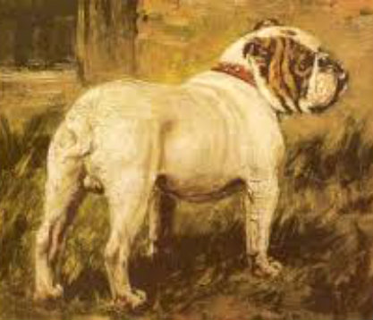 Historical English Bulldog