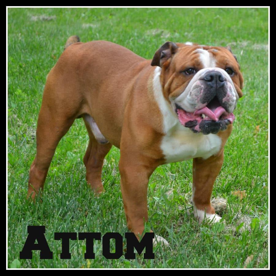 Attom5