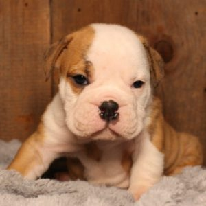 why sloppy biosecurity practices can put your new puppy at risk
