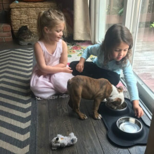 Is your bulldog eating too fast